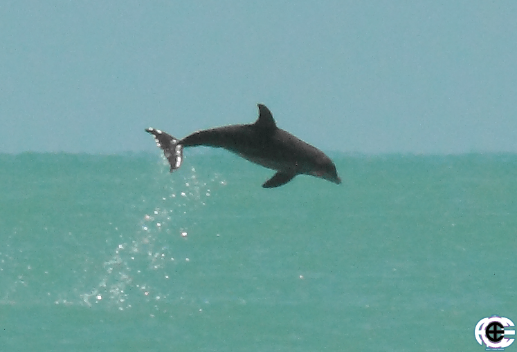 Enlarged Jump